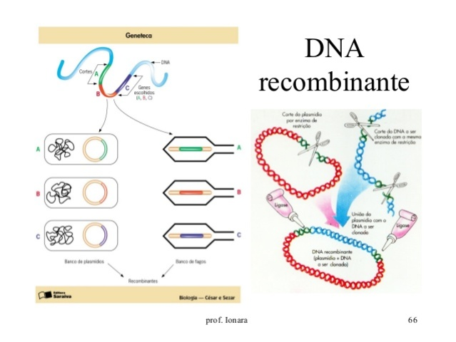 INSULINA POR TECNICAS DNA RECOMBINANTE