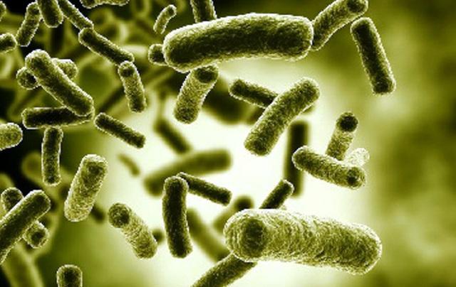 Microorganismos. Ferdinand Cohn