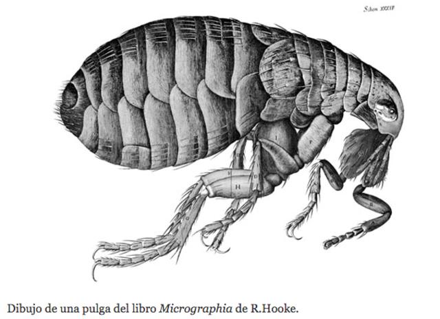 Micrographia - Robert Hooke