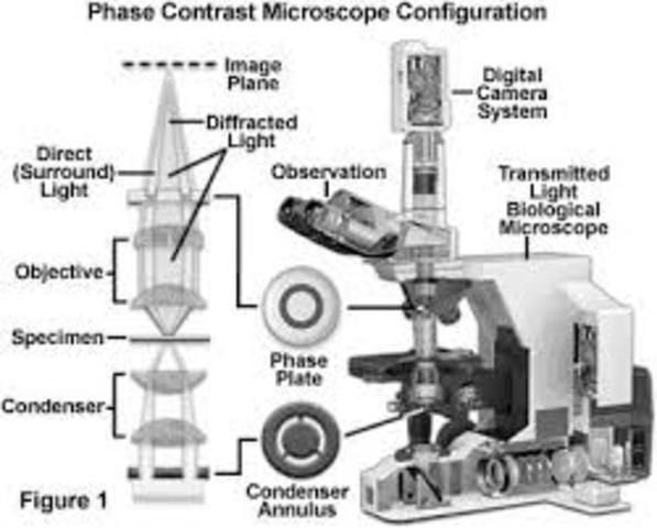 Microscopio de contraste de fases. Frits Zernike