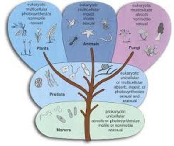 Clasificación taxonómica. Robert Whittaker.