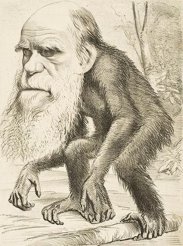 Darwin y la evolución humana