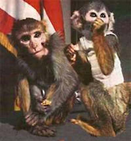 U.S. Launches First Primates in Space
