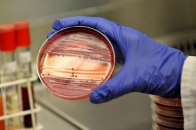 Método para reproducir bacterias en un medio de cultivo