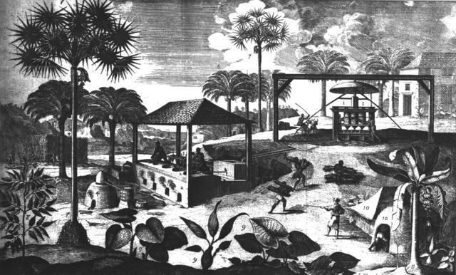 Plantations in the Caribbean Begin to Export Sugar