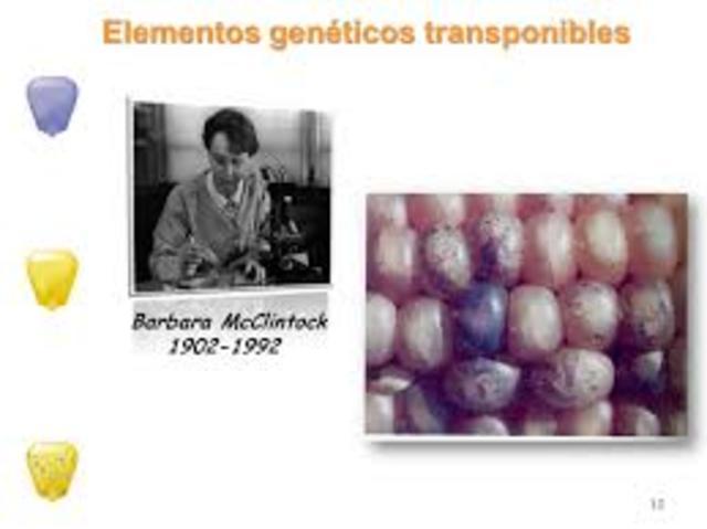 Descubrimiento de elementos transponibles o elementos genéticos moviles- Bárbara McClintock.