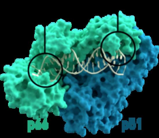 Descubrimiento de los retrovirus/transcriptasa reversa - Howard Temin, David Baltimore y RenatoDulbecco