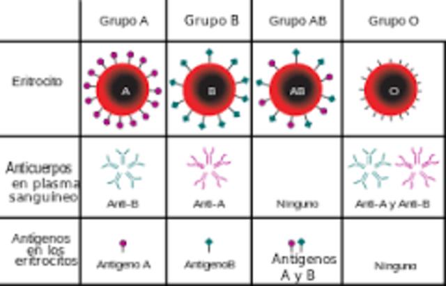 Grupo sanguineo ABO