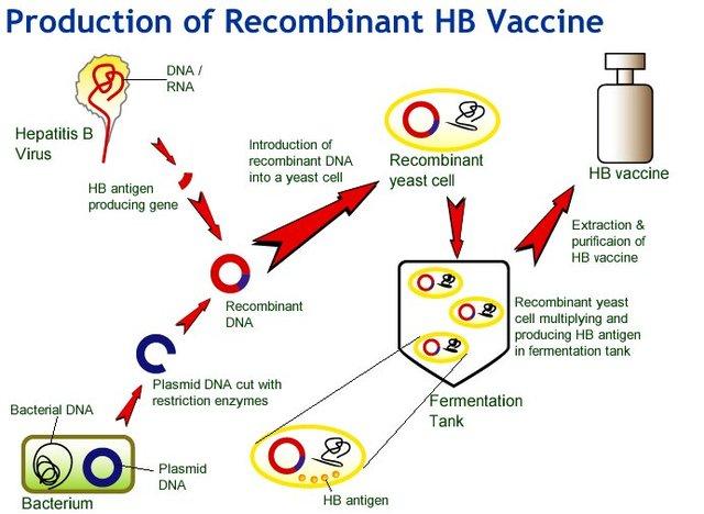 First Recombinant Hepatitis B Vaccine