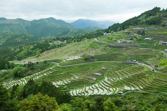 3 million acres into rice paddies