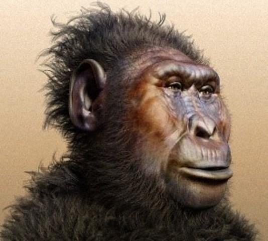 Paranthropus Bosei  2,3ma