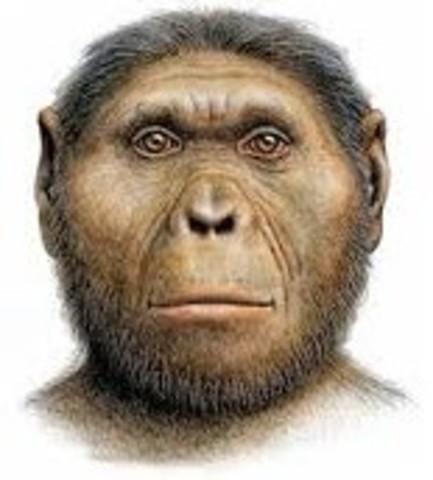 Paranthropus Robustus  2,1ma