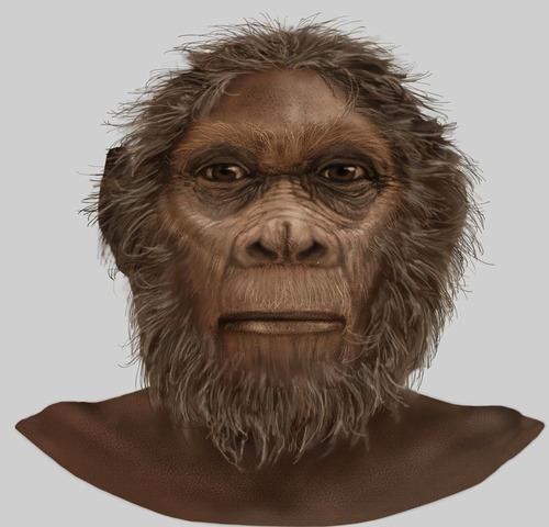 Homo Rudolfensis  1,8ma
