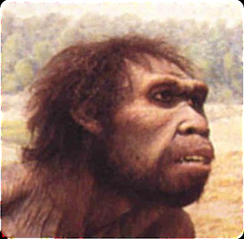 Homo Ergaster  1,5ma