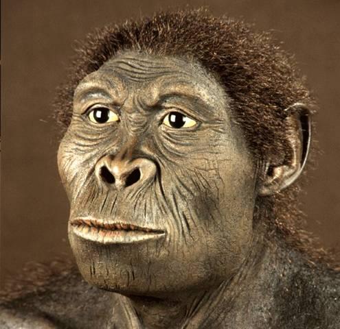 Homo Habilis  2,0ma