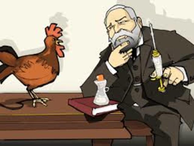 First Attenuated Vaccine: Chicken Cholera