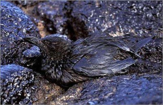 Derrame de 25 mil toneladas de crude