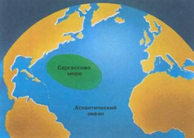Открытие Саргассова моря
