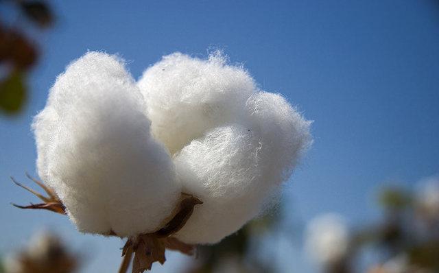 Cotton Overproduction