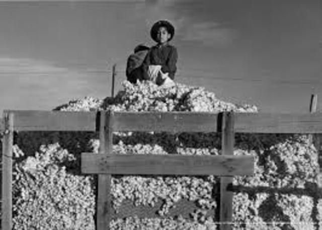 Too Much Cotton
