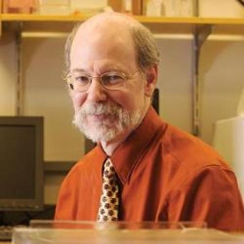 Robert Horvitz publishes on programmed cell death: apoptosis