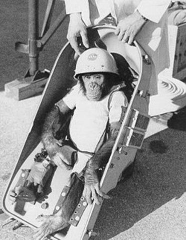 Chimp in Space