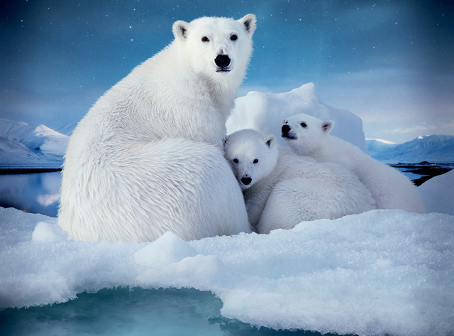 Artic Conservation Act