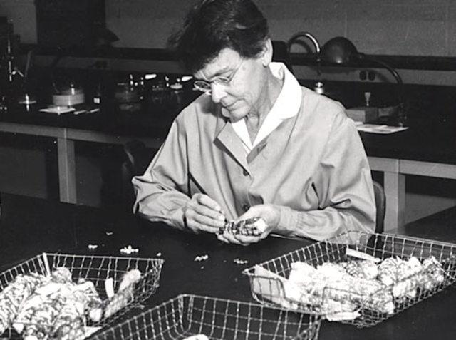 Barbara McClintock and corn chromosomes