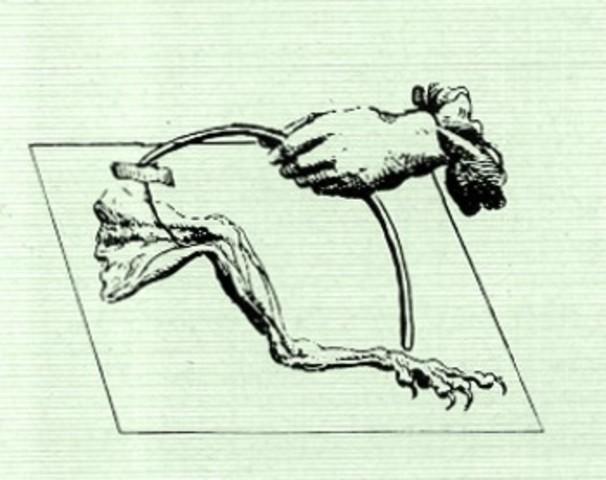 """Luigi Galvani crea el concepto de """"electricidad animal""""."""