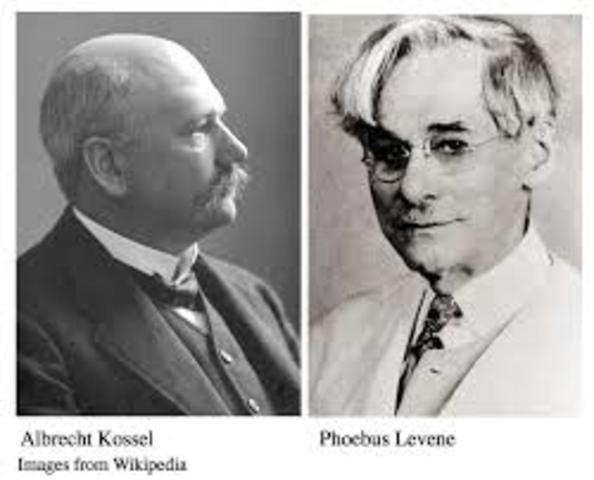 Levene y su maestro Albrecht Kossel