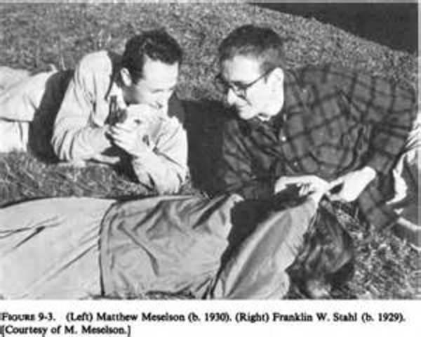 Matthew Meselson y Franklin Stahl