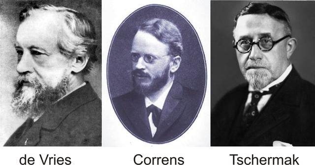 Correns, Tchermak y De Vries ,redescubren las leyes de Mendel.