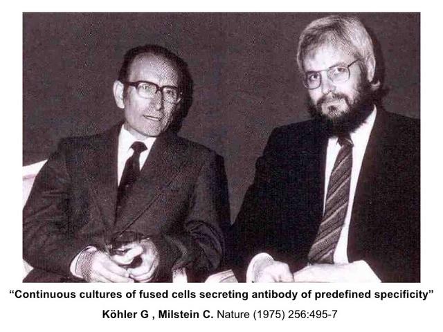 Cesear Milstein y George Kohler, descubren los anticuerpos.