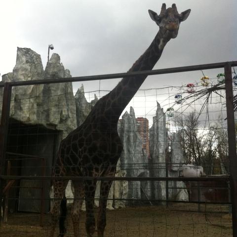 Зоопарк, Краснодар