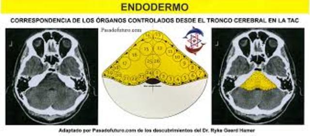 Endodermo