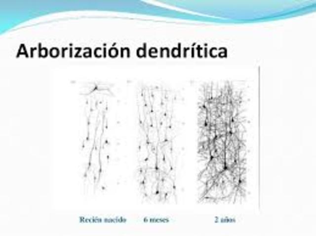 Arborización dendrítica