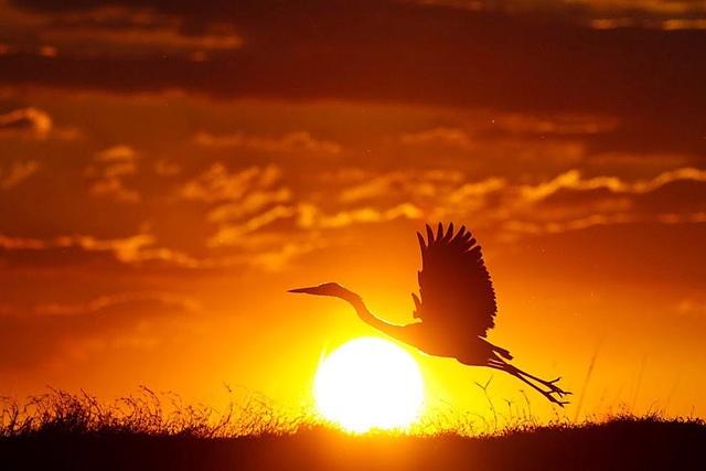 Статья Соловьева «Красота в природе»