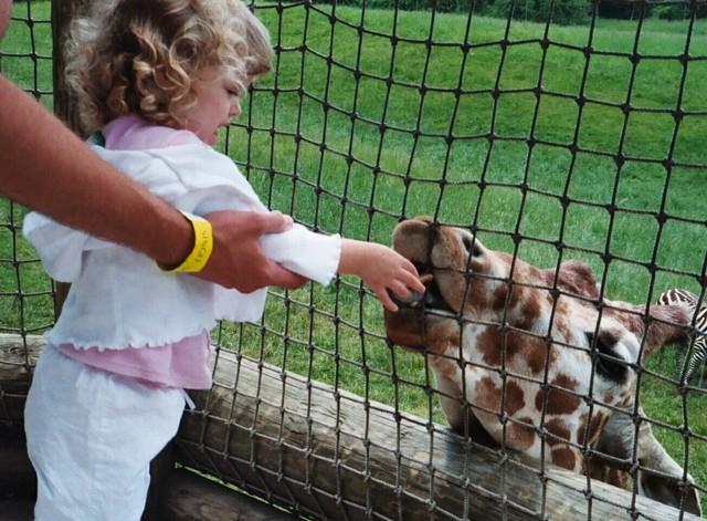 I'm Feeding a Giraffe at a Zoo