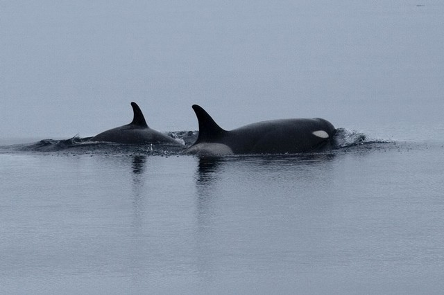 Ross Sea Whaling