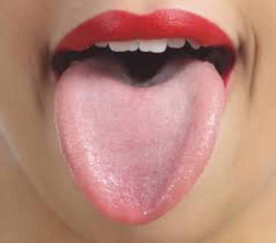 Tongue and taste buds- week 11