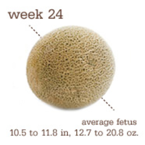 Week Twenty-Four