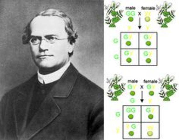 Publicación del trabajo de Mendel, titulado como Experimentos sobre hibridación de plantas.