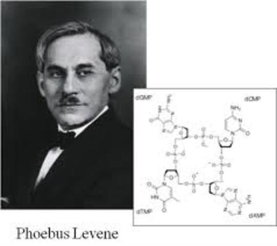 Phoebus Levene identificó de que está formado un nucleótido.
