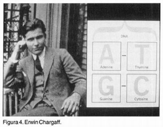 Experimento de Erwin Chargaff.