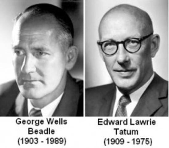 Edward Lawrie Tatum y George Wells Beadle muestran que los genes codifican las proteínas.