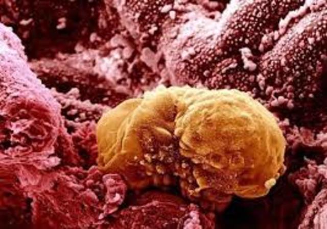 Rapid cell splitting