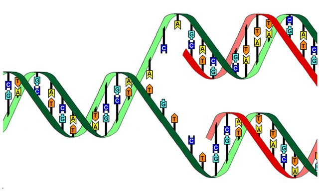 Códigp Genetico