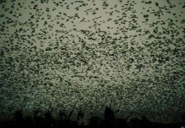 February 2002: The Locusts