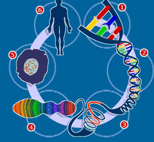 Borrador proyecto Genoma Humano