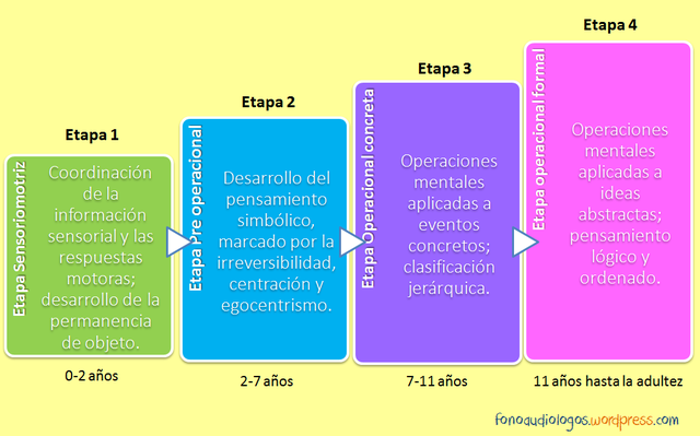 Jean Piaget Etapas del desarrollo cognoscitivo